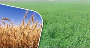 واردات مصر من القمح تسجل 283 مليون دولار فى فبراير الماضى