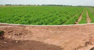 كل ما تريد معرفته عن الأراضى الزراعية المستصلحة عام 2020